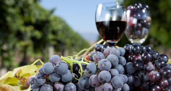 wine-grape-picresized (1)